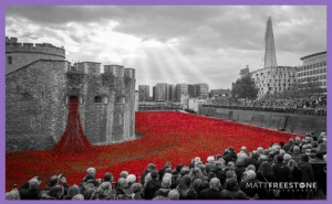 Tower poppies2