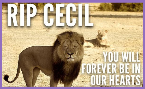 Cecil the Lion 2