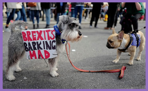 Brexit derangement syndrome barking mad