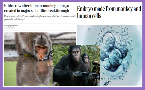 embryo monkey human chimera planet of the apes